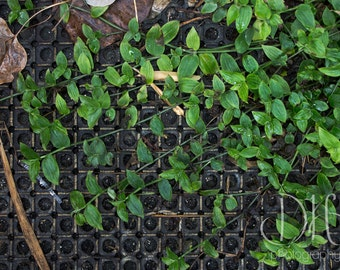 Leafy Grid - Nature Photography - Greenery - Plants - Digital