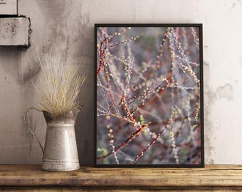Spring flower photography, nature photography, flowers floral botanical art,  living room wall decor, rustic house decor, blossom poster