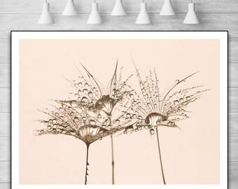 Dandelion print. dandelion wall art. dandelion art print. dandelion flower print. dandelion printable. dandelion art. dandelion prints. art