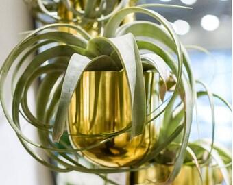Plant LIfe #9 | Framed