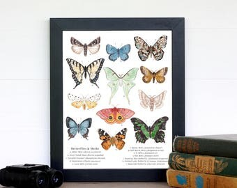 Butterflies and Moths 8 x 10 Print - Entomology, Montessori, Educational, Natural History, Lepidoptera, Insects, Nature Study
