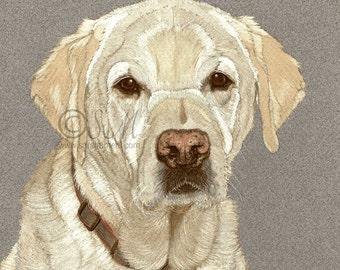 Yellow Labrador 7x7 Inch Print