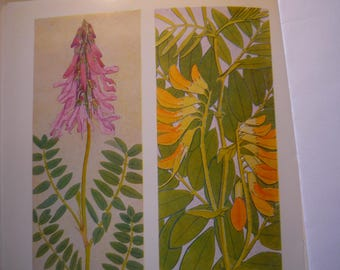 Alipine Flowers  Botanical Print - - Flower Lithographs - vibrant color prints - double sided - ready to frame - pinks yellows orange