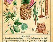 Botanical Boo Loo print (classic tiki cocktail)