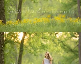 Digital Background  Yellow Flower field at Sunset -  Eliz Alex-  Instant Download, composite, stock