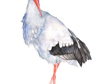Stork print of watercolor painting, S20617, 5 by 7 size, Stork watercolor, Stork painting, stork illustration