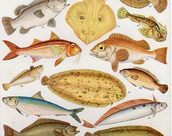 Antique British Art Print 1938, Sea Ocean Fish, color lithograph print bookplate 35