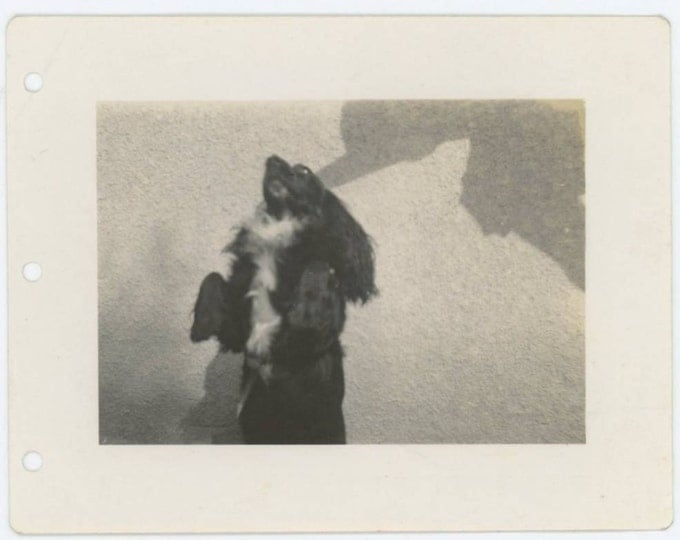 Dog and Shadow, c1940s Vintage Photo Snapshot (612531)