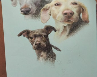 Two Pet Portrait - Colored Pencil