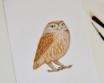 Owl print | Little Owl picture | Owl art print