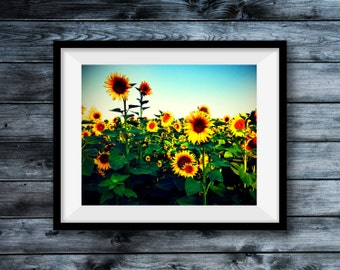 Sun Flower Sessions - Photographic print