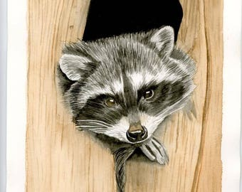 Raccoon Painting, Original Watercolour, Art, Painting
