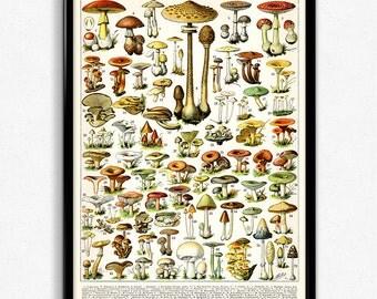 Mushroom Illustration Vintage Print 1 - Mushroom Poster - Mushroom Art - Home Decor - Home Art - Kitchen Art - Botanical Science - Larousse
