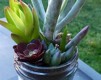 Fresh Succulent Arrangement in Mason Jar