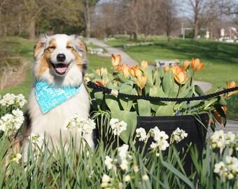 Love You Teal Dog Bandana - Dog Bandanas - Blue Dog Bandana - over the collar bandana - on the collar bandana - cat bandana - pet fashion