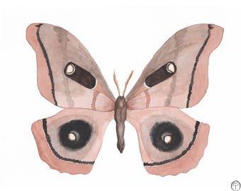 Polyphemus silk moth,watercolour painting, butterfly print, butterfly watercolor, butterfly art, butterfly painting, wall art