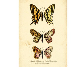 1879 Antique Swallowtail Lithograph Butterfly Illustration. Insect. Entomology. Natural History.