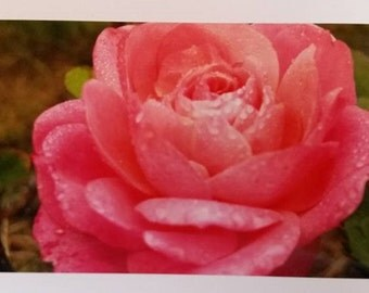Pink rose card 5x7