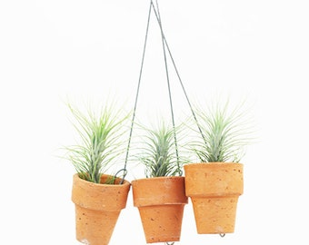 Triple mini terracotta pot with tillandsia funckiana set by Joinfower Joinfolia.