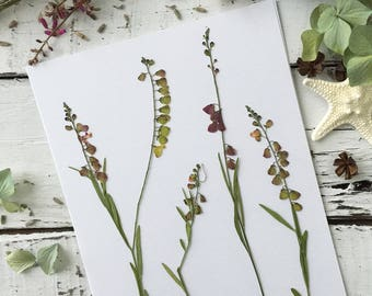 Real Pressed Flowers:  Natural Florida Wildflower > Dye Free - Biodegradable - ECO Friendly