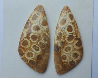 Fossil Coral Pairs
