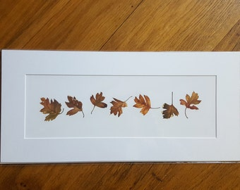 Dancing Hawthorn Leaves mounted Giclee print by Jackie Isard