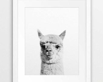 Alpaca Print, Alpaca Wall Art, Llama Print, Black & White Animal Print, Llama Photo, Farm Animal, Modern Nursery Decor, Kids Room Printable