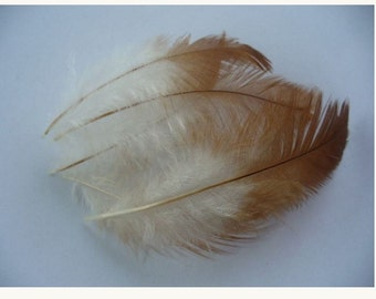 5 rare feathers for various confections PO 100