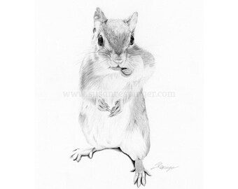 Squirrel Original Drawing
