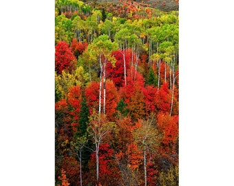 Idaho Autumn Fine Art Giclee Print, Modern Wall Art Featuring Fine Art Nature Photography For Any Home Or Office Decor