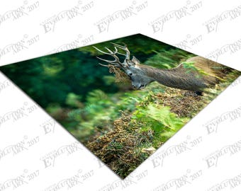 Print on Canvas Red deer in the Forest wildlife X1396