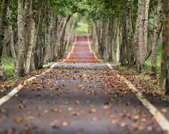 Fall Road Backdrop, Backdrop, Background, Trees, Fall Leaves, Nature, Digital Download