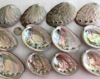 Small Abalone Shell, Beach decor, ring dish