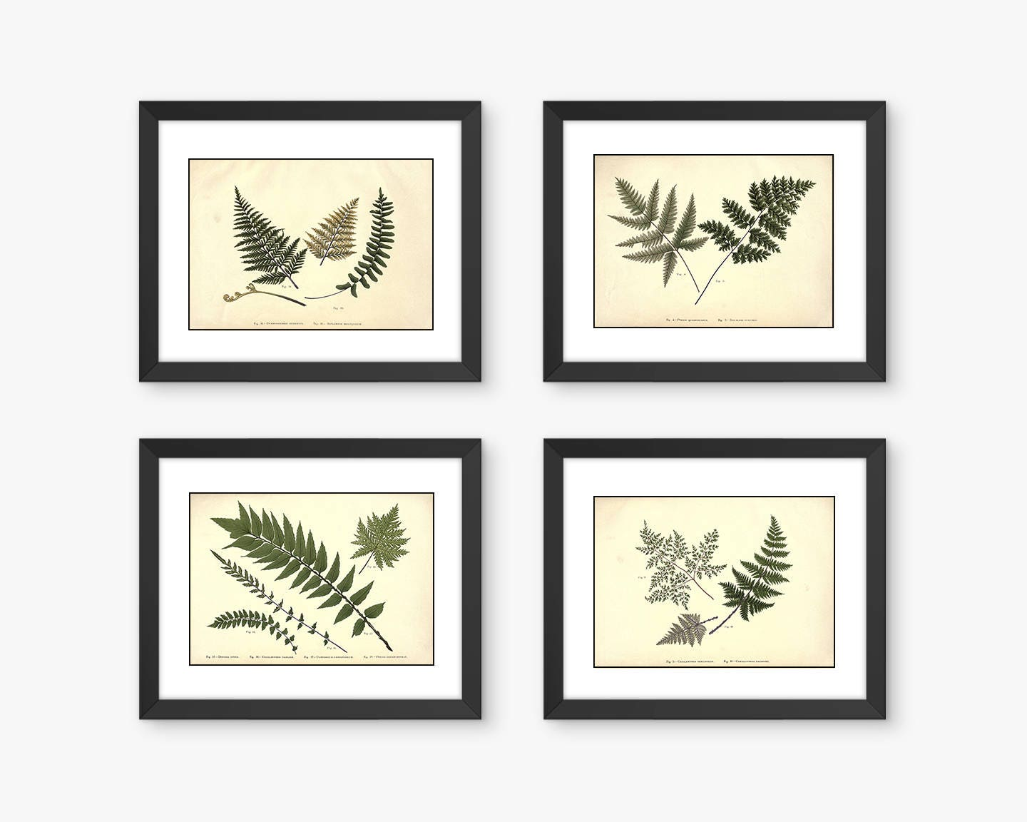Fern Prints Fern Wall Art 4 Print Set Botanical Print