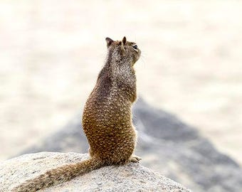 Yearning Squirrel