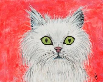 Cat, white cat, fluffy