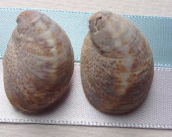 Seashell earrings 21
