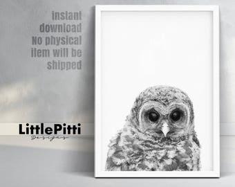 Owl print, woodlands nursery bird, black white grey, bird prints, baby owl photo, woodlands nursery animal, digital download, nursery decor