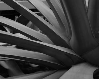 Macro Shot of Cactus Print
