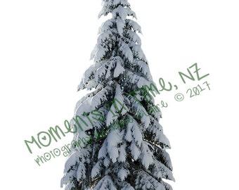 MIT Snowy Pine Tree Digital Overlay
