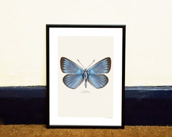 Blue Butterfly Framed Insect Print