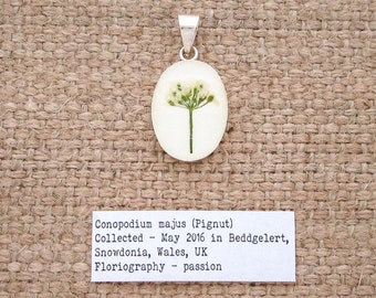 Pignut Flower Pendant. Sterling Silver 925 Botanical Necklace with real flower specimen