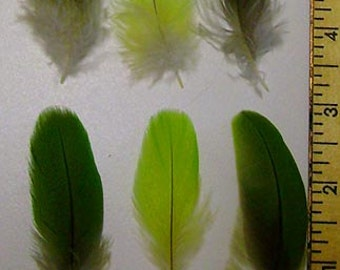 25 Green Macaw & Parrot Feathers 2 to 7 inches CHOOSE YOUR SIZES!***