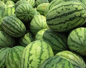 ORGANIC Kalahari Melon Seed Oil Unrefined Undiluted COLD PRESSED Carrier Oil, Massage Oil, Organic Wild Watermelon Oil, Organic Ootanga Oil
