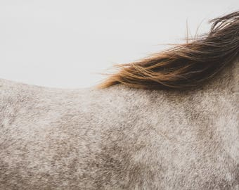 Wilder than the Wind - Horse Photography (Equine Fine Art Prints)