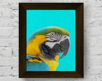 parrot wall art print, bird tropical poster, macaw tropical decor, parrot wall decor, bird printable artwork, instant digital download