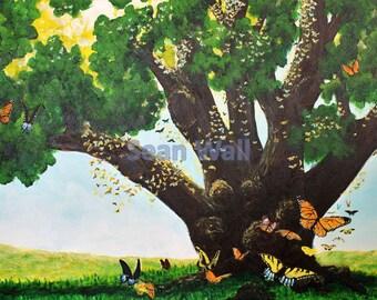 Butterfly Oak