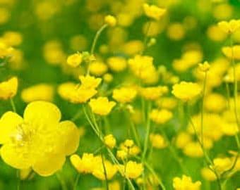 Buttercup Flower Essence