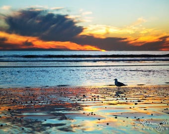 "Sunset Wall Art   ""Seagull Sunset""   California Beach Photo Print   Vivid Sunset Reflection Print - Bright Beach Wall Art - Beach Landscape"