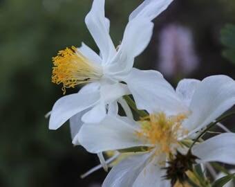 Silk like Wild Mountain Flowers